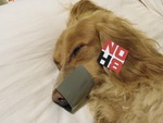 michelle nichols - even doggies support NOH8.......