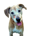 Jennifer Buckner - My name is Neelah.  I'm a dog who supports NOH8!